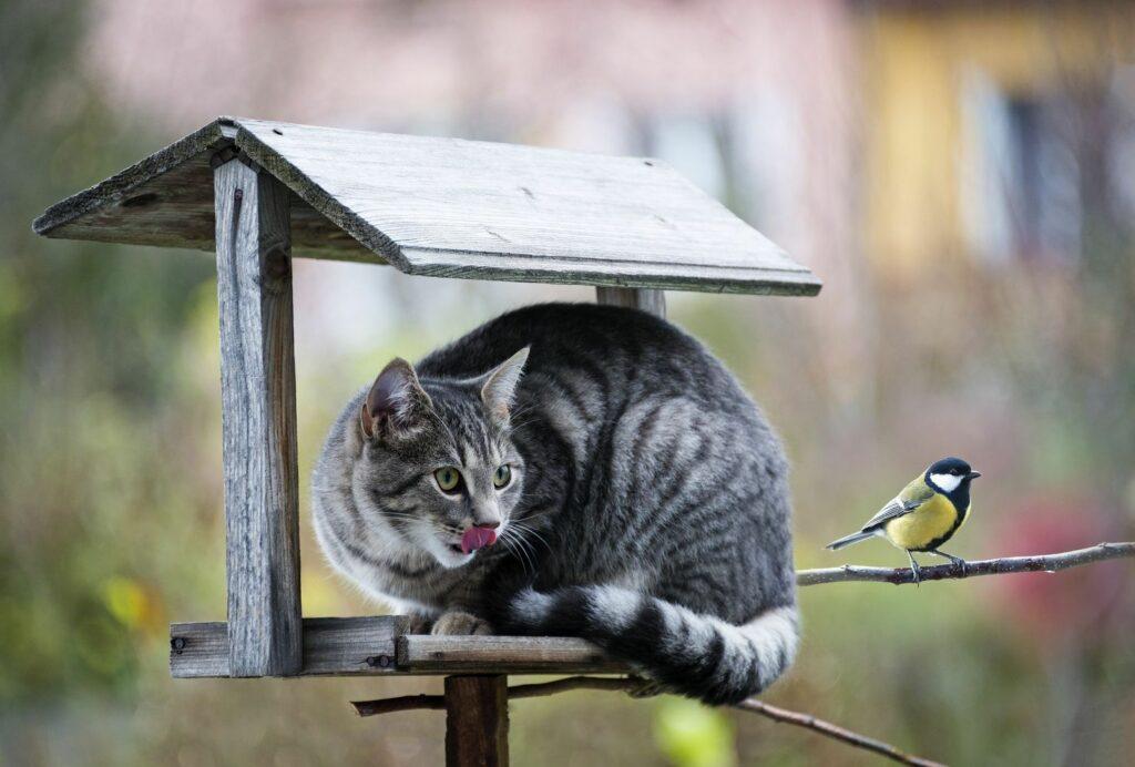 Vogelhaus richtig aufhängen