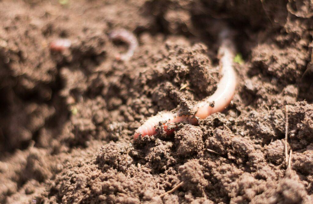 lehmhaltiger Boden