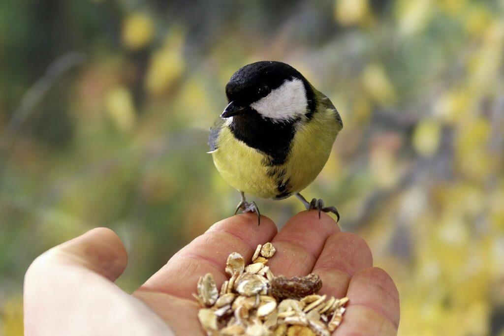 Sommerfütterung Vogel