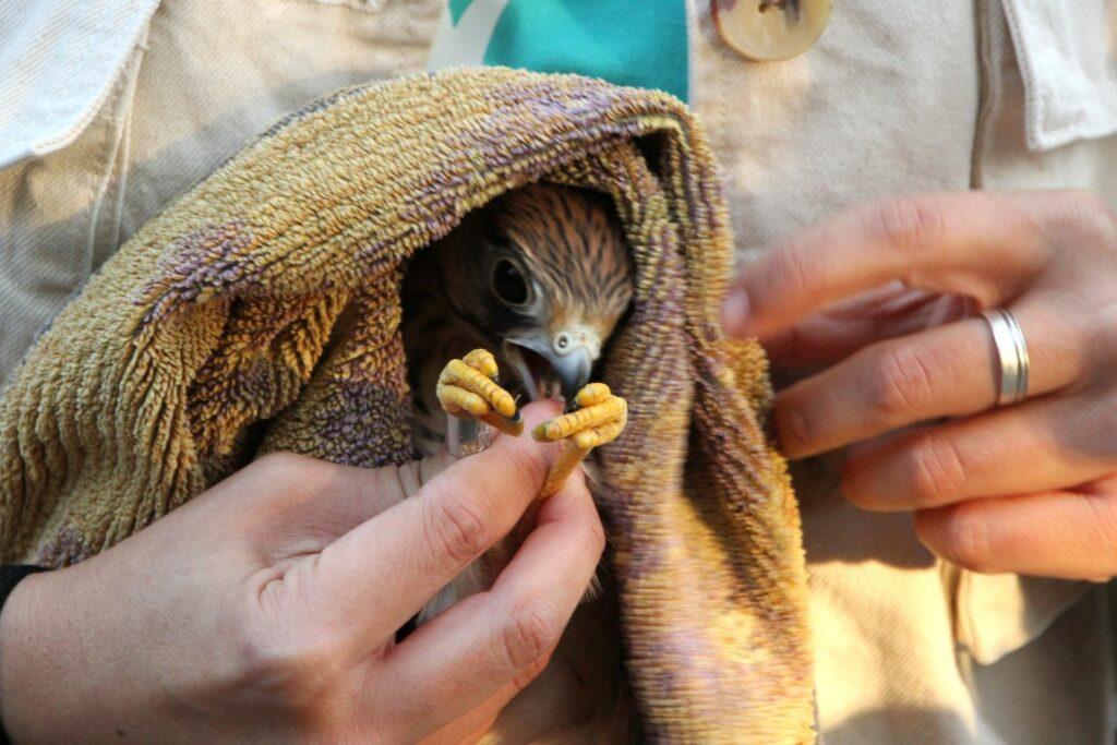 verletztem Vogel helfen