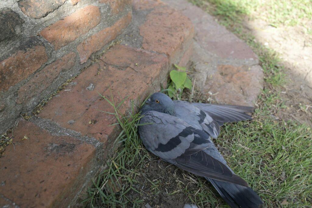 gefundener Vogel