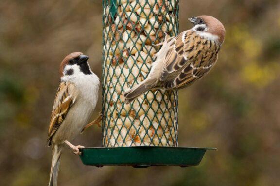 Vögel richtig füttern: Ganzjahresfütterung oder Winterfütterung?