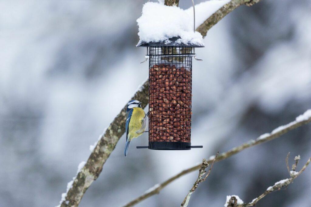 Winterfütterung von Wildvogel
