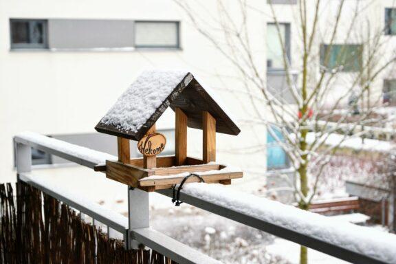 Vögel füttern auf dem Balkon: Was zu beachten ist