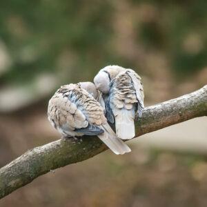 Wo schlafen Vögel? Nachts, im Winter & bei Sturm
