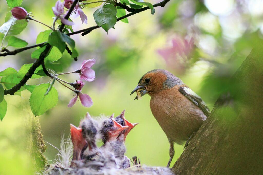 Jungvögel in einem Nest