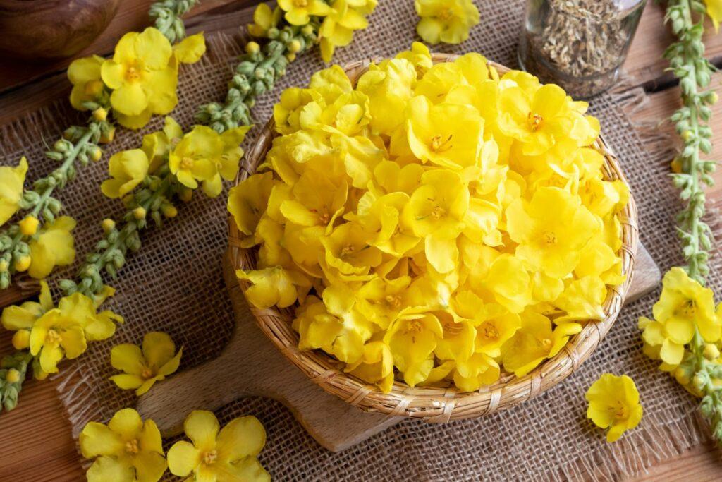 Königskerzen-Blüten in einem Korb