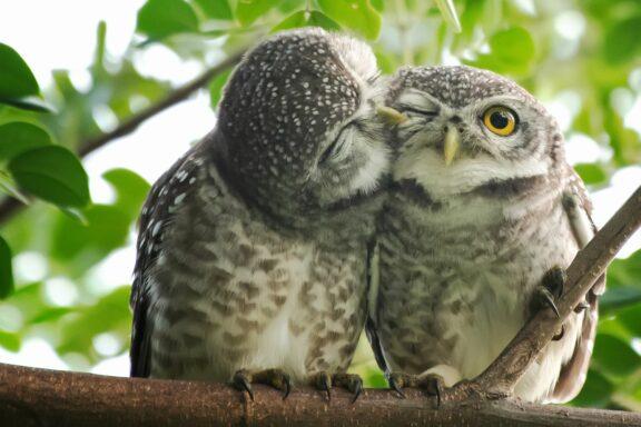 Können Vögel riechen, hören & Farben sehen?