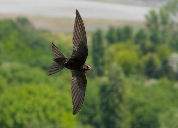 Warum können Vögel fliegen? Flugarten, Flugbilder & interessante Fakten