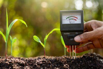 pH-Wert des Bodens bestimmen: Wie man alkalische & saure Böden erkennt