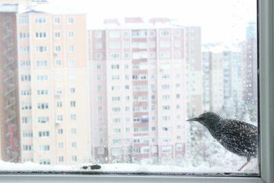Vogelschutz am Fenster: So verhindert man Vogelschlag