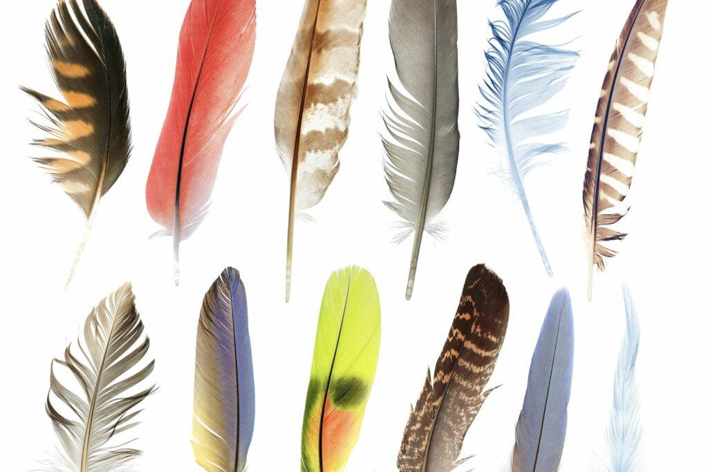 verschiedene Vogelfedern