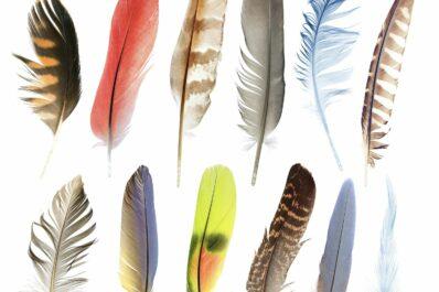 Federn von Vögeln: Mauser, Eigenschaften & Federarten