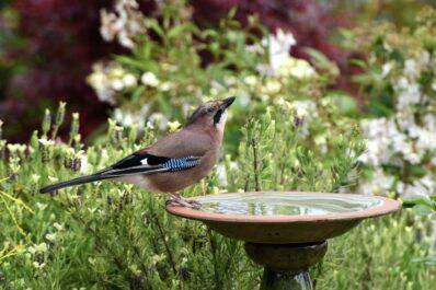 Vogeltränke im Garten: Art, Standort & im Winter