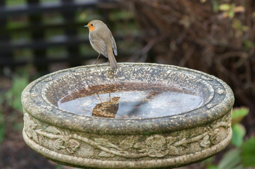 Vogeltränke im Garten