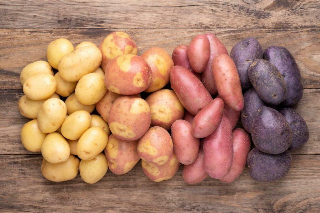 Kartoffel Blauer Schwede