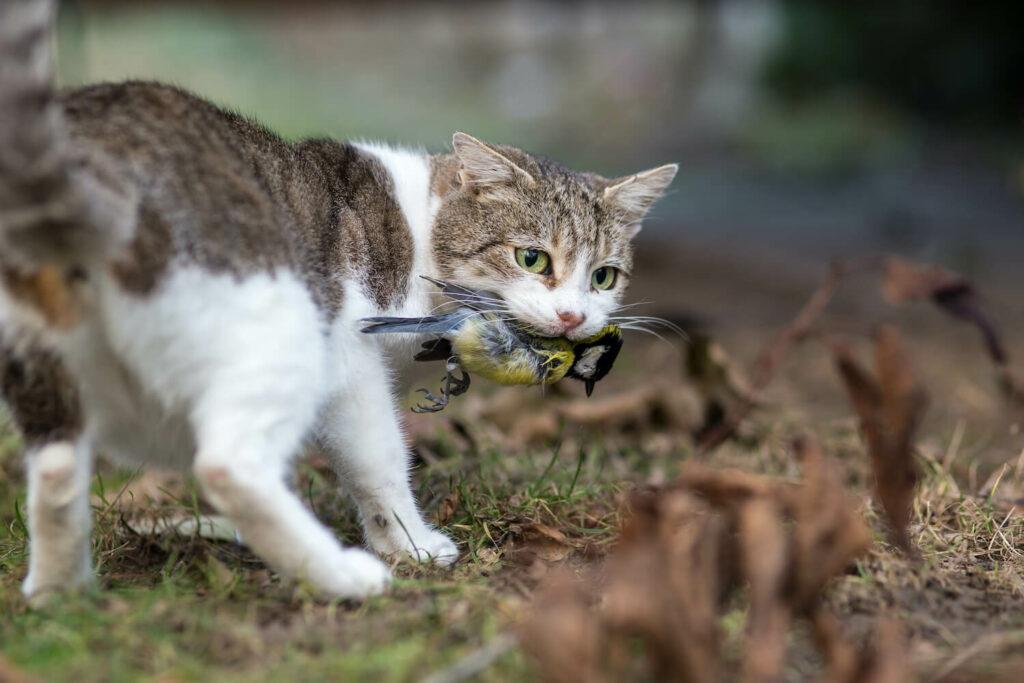 von Katze gefangener Vogel