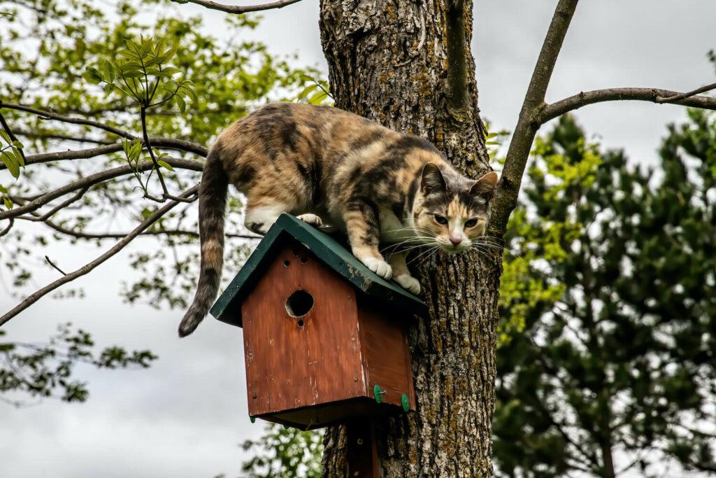 Katze auf Nistkasten