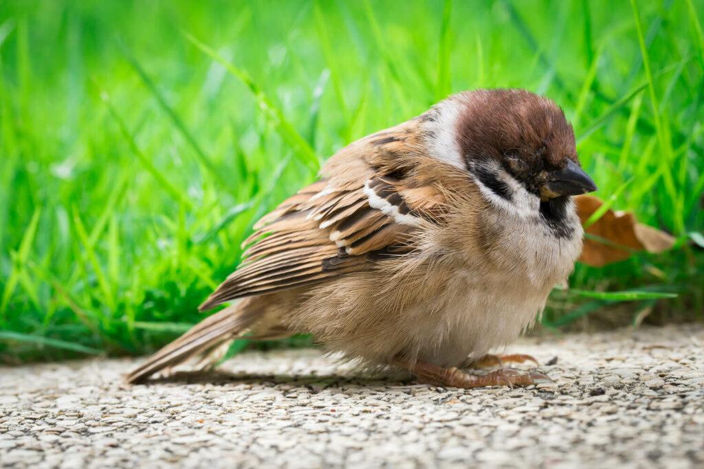 Vogel mit Krankheit