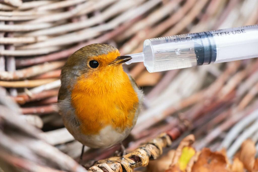 Pflege von krankem Vogel