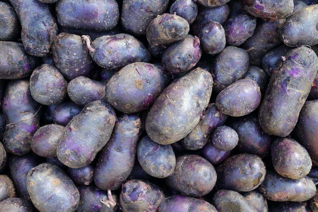 Kartoffeln in Lila