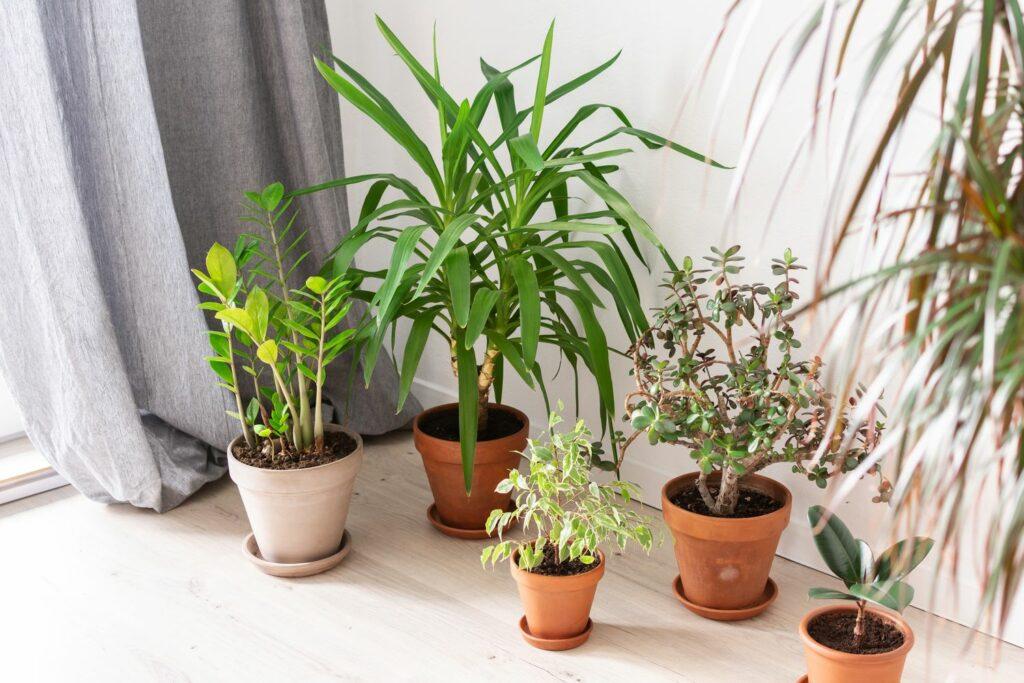 frisch umgetopfte Zimmerpflanzen