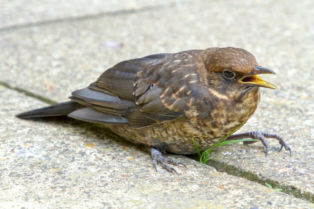 Vogel mit Verletzung