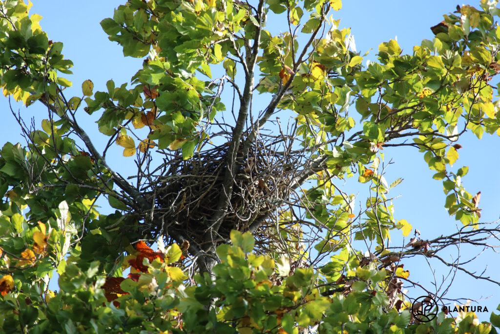 Vogelnest in Baum