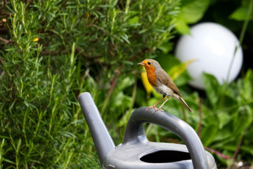 Vogel auf Gießkanne
