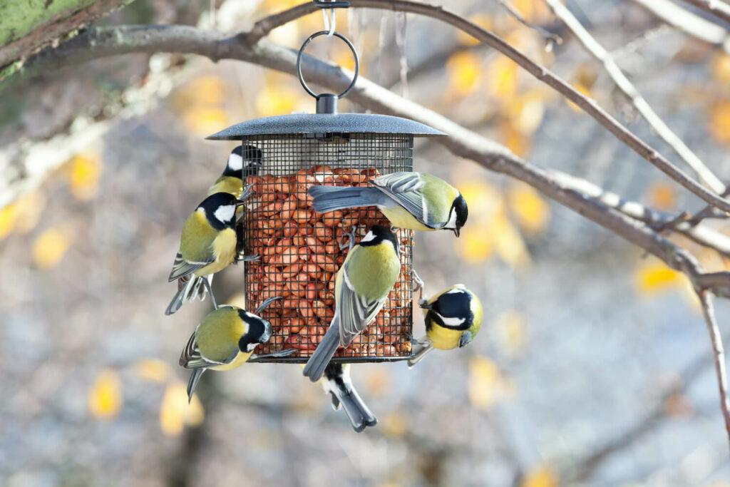 Vögel an Futterstelle
