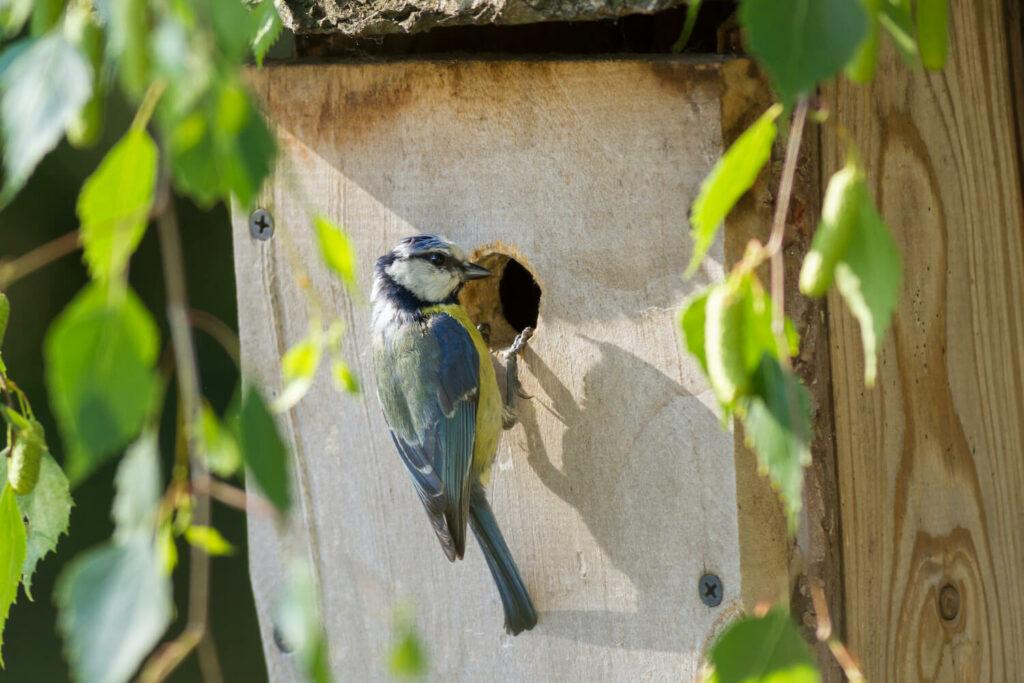 Vogel am Nistkasten