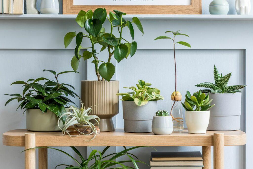 verschiedene Zimmerpflanzen