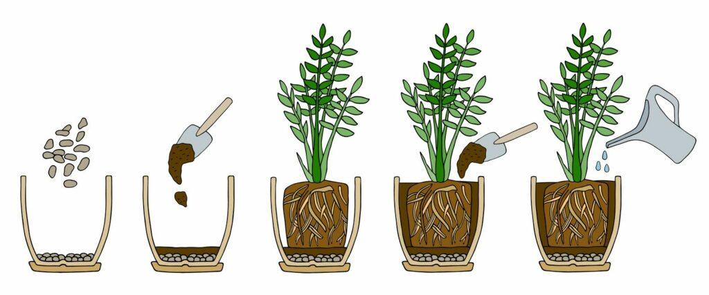 Anleitung zum Umtopfen von Pflanzen