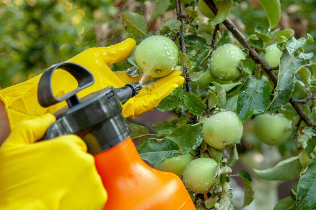 Bekämpfung des Apfelwicklers
