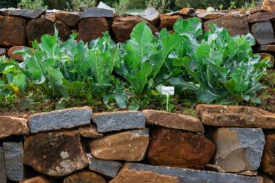 Hochbeet aus Naturstein: Vorteile & Anleitung zum Selberbauen