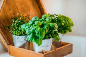 Basische Kräuter: Die besten Kräuter für die basische Küche