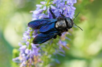 Wildbienen: Arten, Lebensweise & wie kann man wilde Bienen unterstützen?