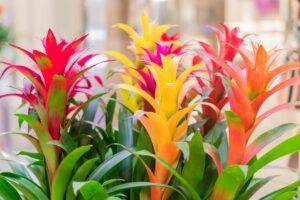 Bromelien: Pflege, Standort & die schönsten Bromelien-Arten