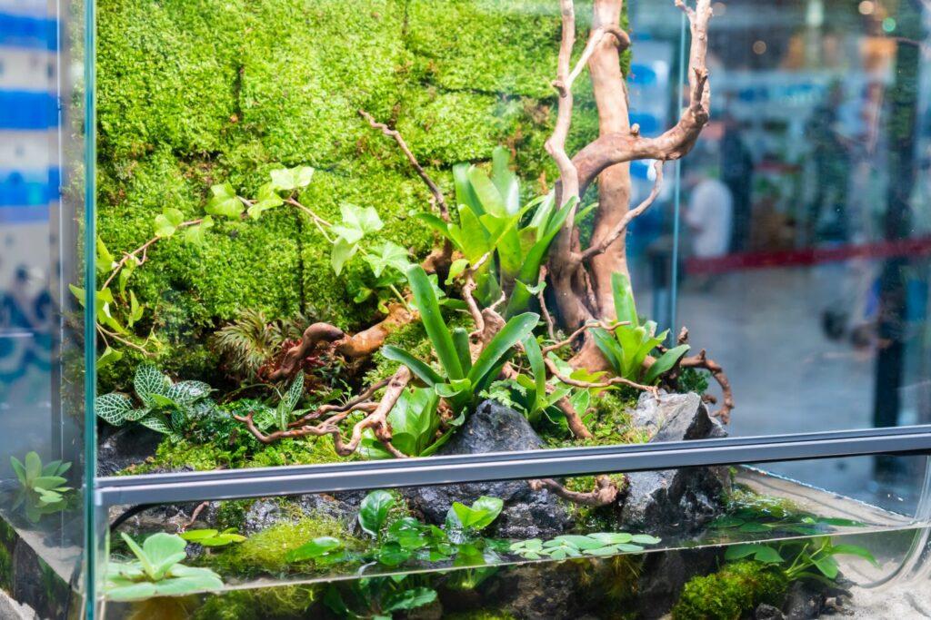 Bromelie im Terrarium