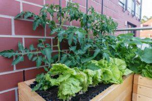 Hochbeet auf dem Balkon: Bauen & Befüllen