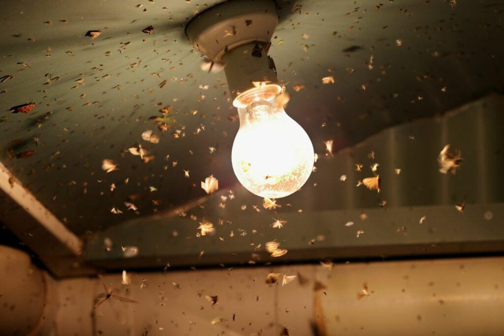 Motten im Licht