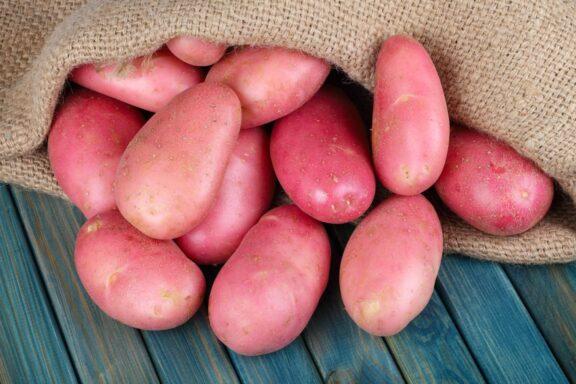 Rote Kartoffeln: Sorten, Anbau & Verwendung von rotschaligen Kartoffeln