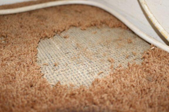 Motten im Teppich: Erkennen & natürlich bekämpfen
