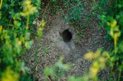 Welche Tiere graben Löcher im Garten?