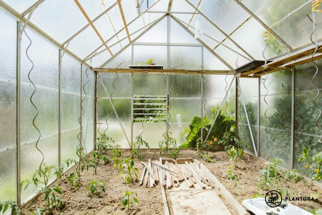 Paprika, Gurken und Tomaten im Gewächshaus