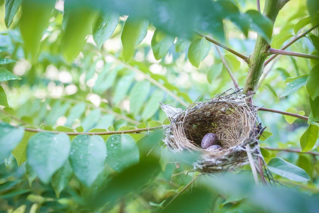 Motten im Vogelnest