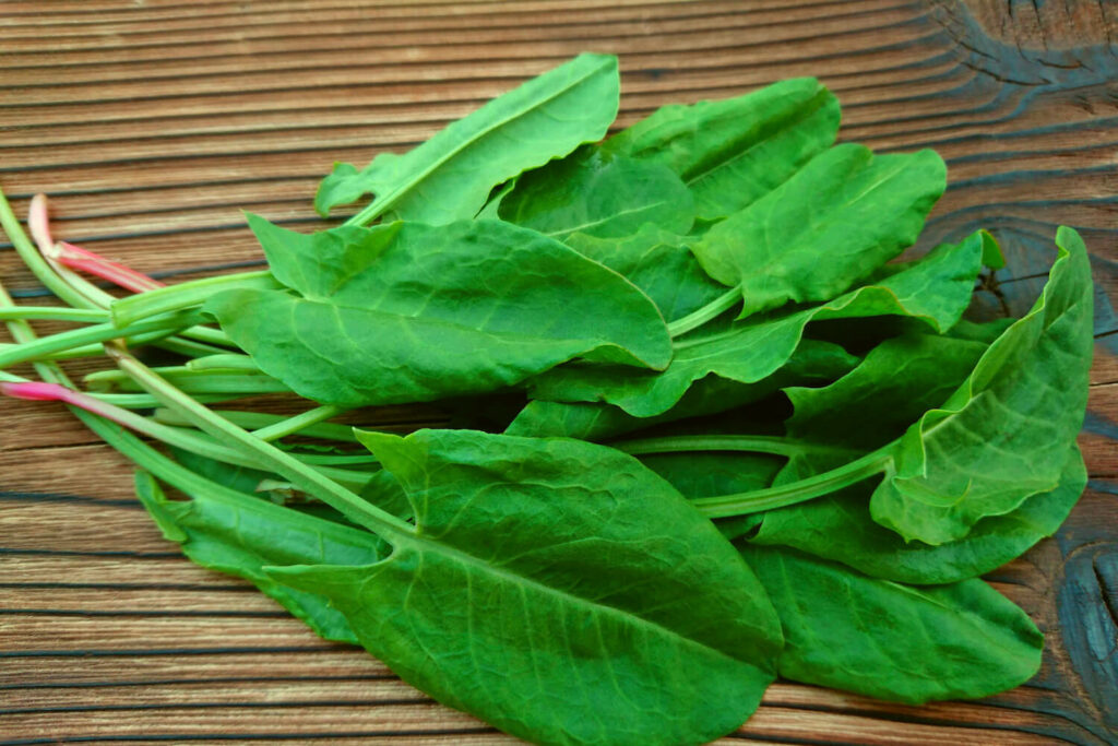 Sauerampfer-Blätter