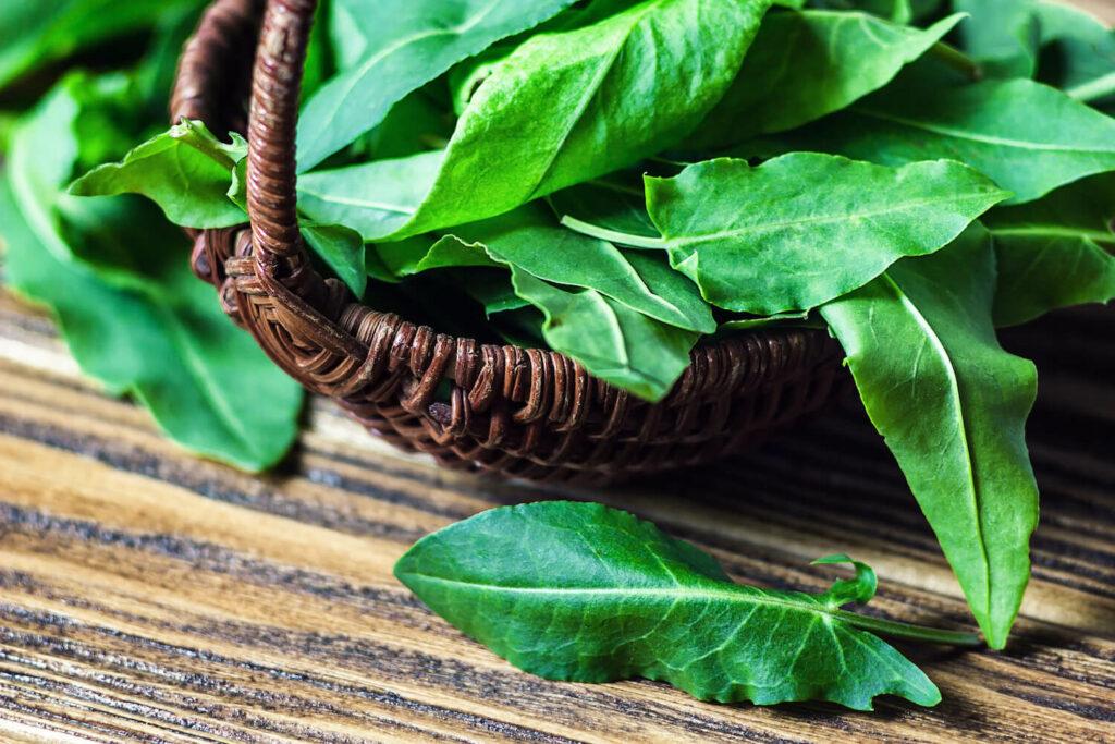 Essbare Sauerampfer-Blätter