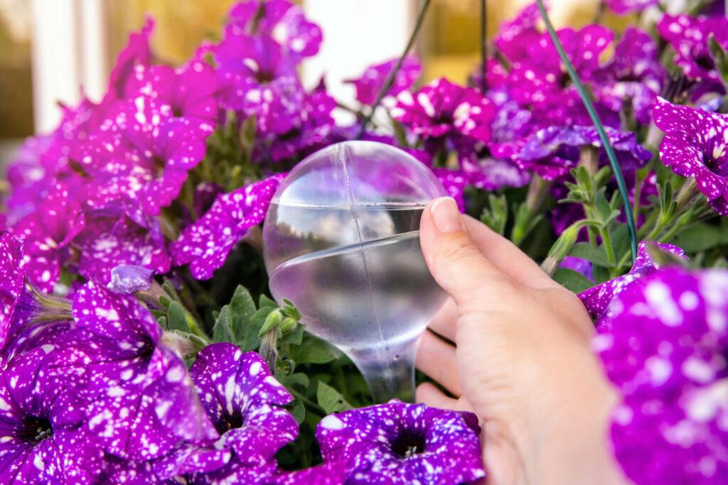 Bewässerung durch Glaskugel
