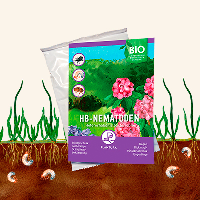 HB-Nematoden von Plantura